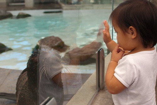 Giving the baby sea lion a high-five