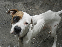 Starving Eyes (AllieSpecht12) Tags: dogs abuse starving