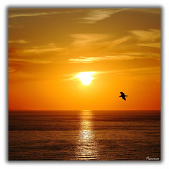 Be free (Danilo Antonini (Pescarese)) Tags: sunset sea sky italy panorama sun reflection nature animal silhouette clouds landscape freedom fly italia tramonto nuvole mare seagull natura volo cielo tuscany toscana sole livorno animale paesaggio gabbiano libert riflesso isoladelba pescarese canonef70200f4lisusm canoneos5dmark2 mygearandme mygearandmepremium