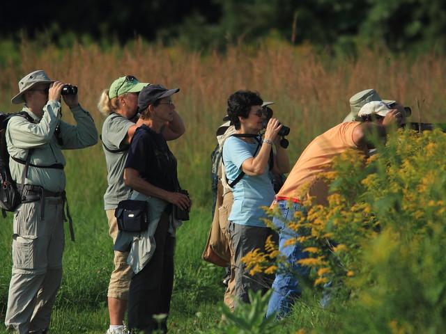 Birders in action 20110903