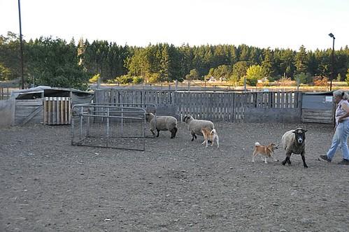 herd9