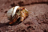 the mars rover (Jessie Reeder) Tags: red beach hermitcrab ecuador sand saveme6 deleteme10 galapagosislands photocontesttnc12