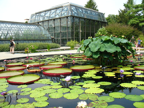 greenhouses and waterlilies