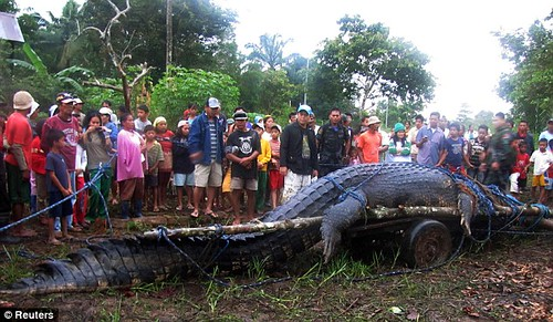 biggest-crocodile-captured2