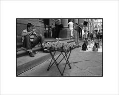 Puesto de bicicletas (Jose Luis Durante Molina) Tags: street summer italy digital calle italia personas viajes verano florencia firenze rue vacaciones bicicletas ete bycicle artesania crucero instantanea artesano impresion ventaambulante ciclos terminada joseluisdurante