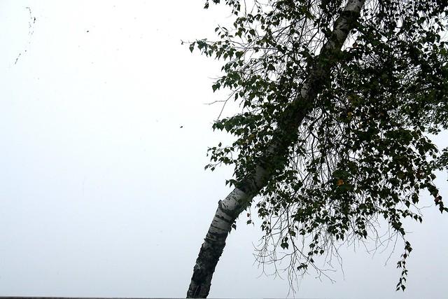 LD tree