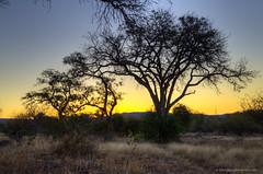 DSC_5255_6_7_tonemapped (davidemartini) Tags: africa sunset panorama tree colors alberi landscape nikon tramonto colours south viewpoint hdr paesaggio sudafrica handfree d7000