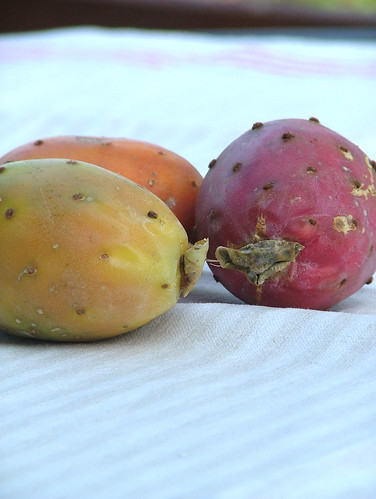 Fichi d'india -  Prickly pear (Opuntia Ficus-Indica)