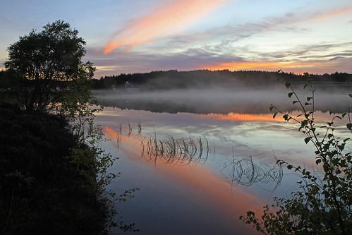 Misty Dawn.