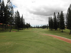 WAIKELE COUNTRY CLUB 233