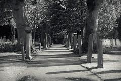 Greyfriars, Perth (monkeyiron) Tags: cemetery grave graveyard scotland rip headstone cementerio tombstone perthshire perth marker cemitrio kirchhoff greyfriars begraafplaats cimitero cimetire  taphophilia