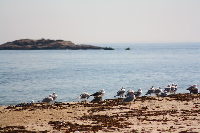 gulls at the shore
