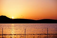 Flamencos en el horizonte (Jose Casielles) Tags: color luz sol reflejo puestadesol laguna flamencos horizonte valla yecla petrola fotografasjcasielles