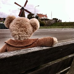 #Bear found the Dutch windmills fascinating & spent hours waiting for the wings to turn
