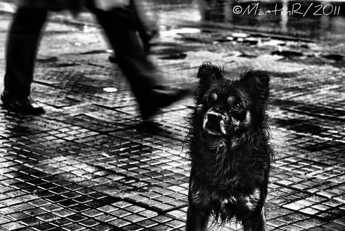 El perro del barrio