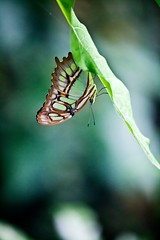 Papillon à honfleur 3 (sylvain.landry) Tags: travel family sky france green art nature canon butterfly photography eos photo lomo europe bestof raw photos bio vert papillon dos 5d normandie dslr reims normandy sylvain landry mkii bigfav gonfleur remois 5dmkii eos5dmkii sylvainlandry
