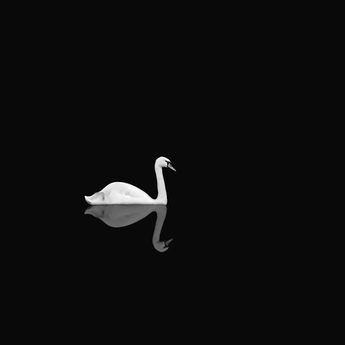 Swan at Night 2011 by James Thornbrook