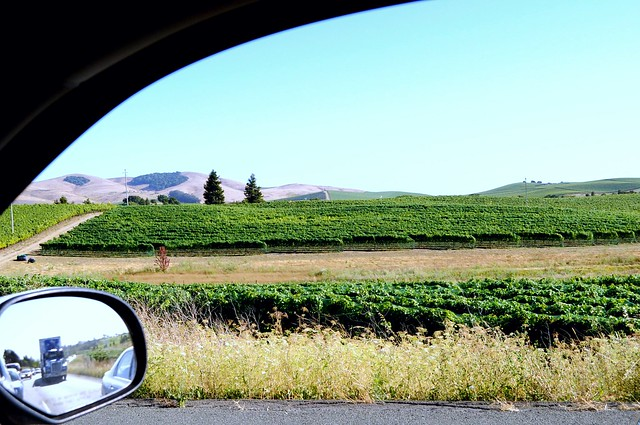View of Napa from my Tahoe