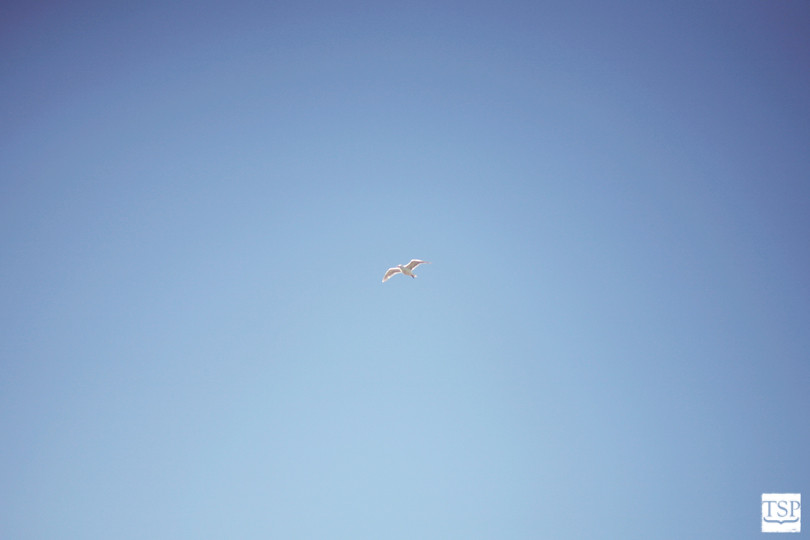 Bird in the Sky