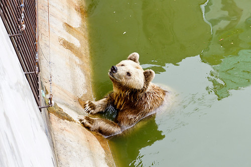 Crocodile Farm :: Bear