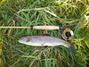 Silver Creek dry fly Rainbow and Cane Loops Rod