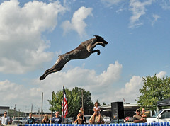 000 Bailey's first jump in finals (The_Little_GSP) Tags: dog virginia fly jump dock richmond germanshorthair bigair gsp chesapeake flyingdog germanshorthairedpointer jumpingdog tidewater dockdogs dockdiving sportsmanshow thelittlegsp littlegspphotography