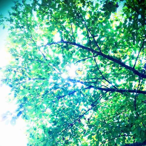 今日の写真 No.348 – 昨日Instagramへ投稿した写真(1枚)/iPhone4+Camera+