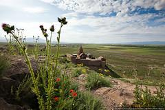 The Khor Virap (varlamov) Tags: flower monastery armenia khorvirap