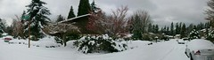 NW Winter (jonacuna) Tags: snow weather