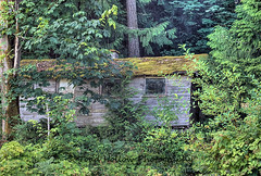 Abandoned House - Cowichan Valley, BC, Canada (Toad Hollow Photography) Tags: old trees house canada heritage history abandoned architecture bc decay neglected vancouverisland weathered decrepit quaint hdr forlorn cowichan cowichanvalley rurex