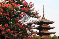 Morning light (Teruhide Tomori) Tags: travel summer flower japan pagoda kyoto   higashiyama yasaka