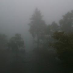 霧に包まれるトレイル