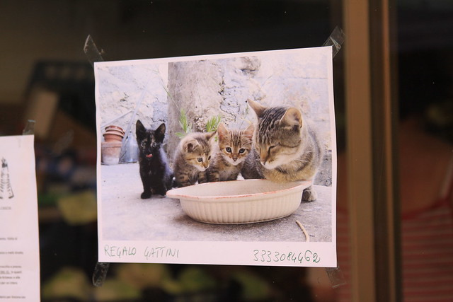 """Regalo gattini"" (free kittens). How could I resist?"