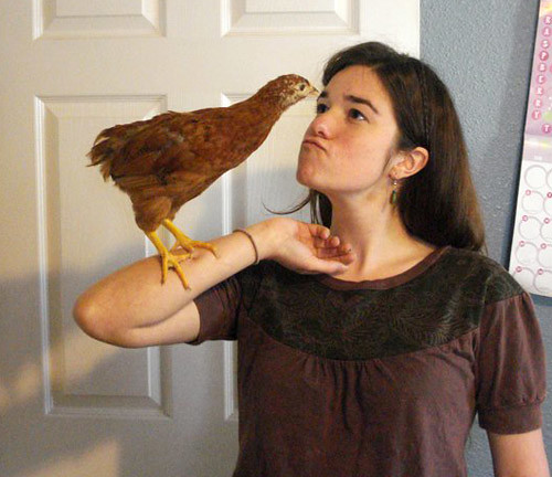 Audrey and the chicken_crop