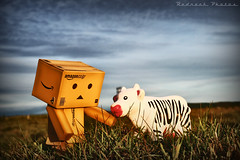 Danbo and the zebra cow 4/365 (Redneck Photos) Tags: toy japanese cow figure 365 kaiyodo danbo revoltech danboard