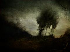 Un árbol ..       a tree .. (tan.solo_milenia .) Tags: ourtime artdigital beyondclick netartii