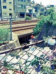 ONOMICHI DAYS - Sanyo Line (junog007) Tags: summer people woman flower japan rail hiroshima ricoh onomichi gx200 mygearandme