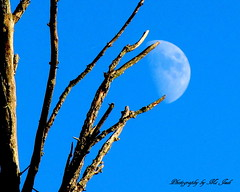 Reach for the Moon (**Ms Judi**) Tags: light sky moon tree beautiful midwest michigan branches bluesky bark godscountry godsgift henespark msjudi reachforthemoon menomineemichigan judistevenson johnhenespark judippc photographybymsjudi