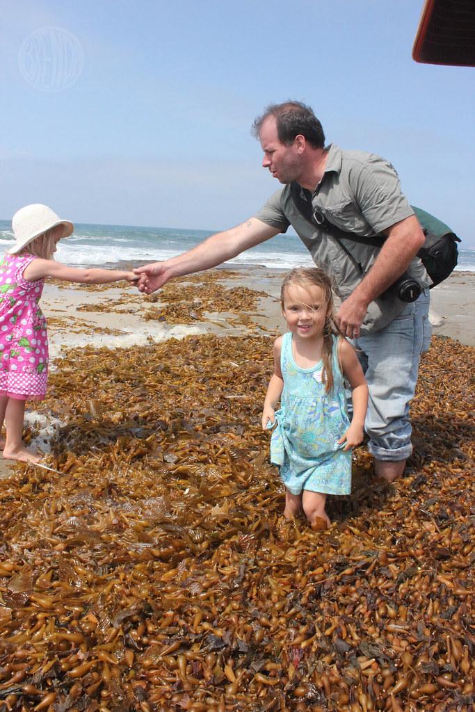 kelp stomping
