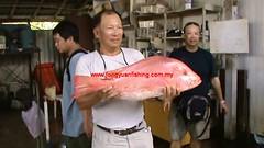 20100736 (fymac@live.com) Tags: mackerel fishing redsnapper shimano pancing angling daiwa tenggiri sarawaktourism sarawakfishing malaysiafishing borneotour malaysiaangling jiggingmaster