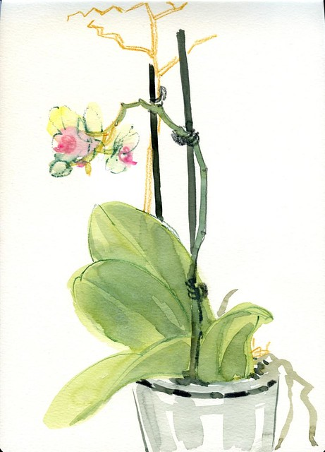 watercolour orchid