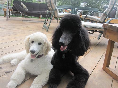 Jackson & Brie Sept 6 2011 009