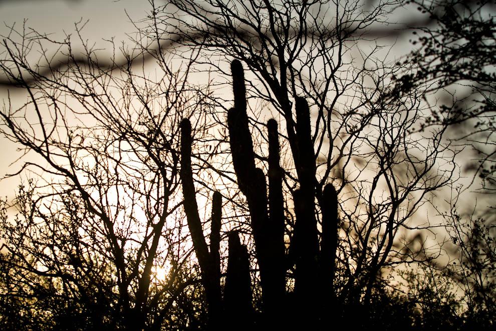El sol, tamizado por el polvo esparcido por el viento contínuo, se escapa entre los árboles y cactus de la flora chaqueña. (Tetsu Espósito)