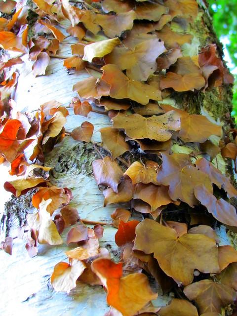 Leaf flutter
