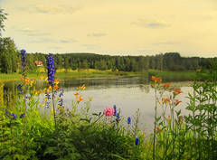 flowers by water (Per Ola Wiberg ~ powi) Tags: niceshot sweden ngc july showroom quintaflower dalarna breathtaking nationalgeographic ineffable 2011 simplythebest inyourdreams npa dreamgarden thegalaxy magicofnature sundborn kartpostal photopassion mywinners eliteclub royalgroup thebeautyofnature keepyoureyesopen flickrbronzeaward freenature heartawards flickrsun dreamplaces magicaltouch peaceawards rubyphotographer salveanatureza lamascotte pink|purple|green naturesphotos naturescreations saariysqualitypictures ablackrose artedeluz ~exclusivity~ flickrunitedaward sapphireawards naturesribbon youandtheworld shininghearts photographicwizards flickrsgottalent flickrssuperstartalent visionaryartsgalleryplatinumgold mygearandme mygearandmepremium mygearandmebronze mygearandmesilver mygearandmegold rsvpsomethingfromtheheart thewonderfulnatureworld onlythebestofnature thenaturessoul artwithoutendandadmired photosoftheotherworld natureskingdomawards pilisbeautifulphotogallery patagonica majesticphotography alicessecretgarden brigettesbeautifulnaturegallery ruby5 flickrsnatureaward agroupofhonestpeople yokopakumayokointernationalphotos naturespoetry~~ soulocreativity magicmomentsinyourlife