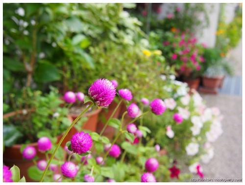 Flowers 110916 #01