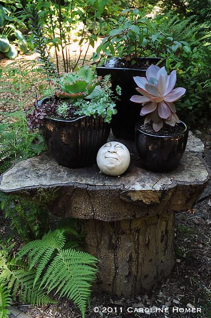 Moon face & succulents