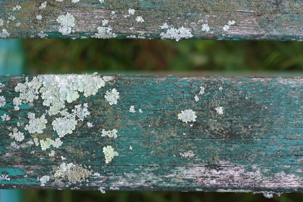 Teal Bench 1