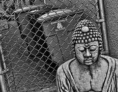 Zen and the Art of Recycling (Nancy Goodenough) Tags: sanfrancisco blackandwhite bw buddha chainlinkfence recycle compost 19thavenue hss compostable sliderssunday getpushed