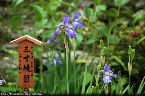 Tenryuji 天龍寺 - Flower Garden